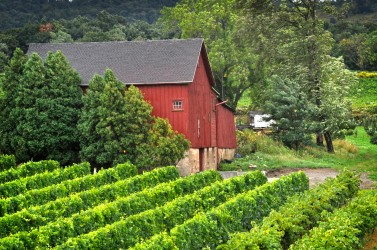 Johnson Estate 1920s barn vineyards Amanda Bracy